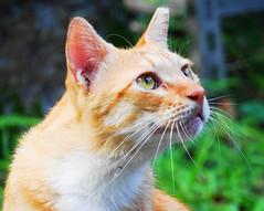 cat () Tags: cat   flickrstruereflection1