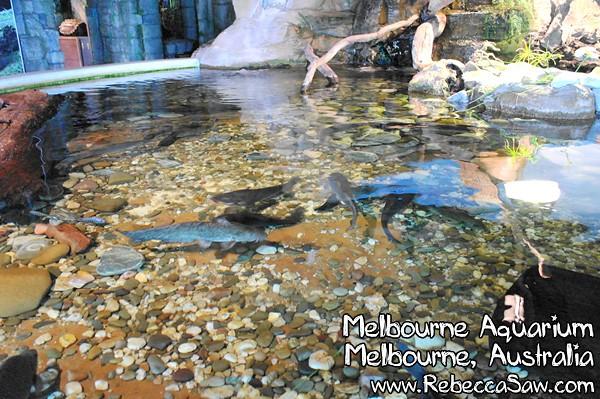 MELBOURNE AQUARIUM-35