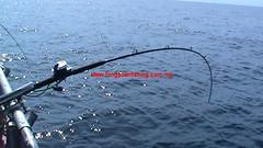 20100802 (fymac@live.com) Tags: mackerel fishing redsnapper shimano pancing angling daiwa tenggiri sarawaktourism sarawakfishing malaysiafishing borneotour malaysiaangling jiggingmaster