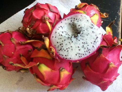 pitaya vine buds, flowers, and fruit 6121274164_a78f684f23