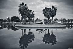 reflejos (mlnilsson) Tags: park parque bw españa cloud white lake black reflection blanco night lago noche boat spain nikon barco negro palm bn reflejo costadelsol palmera malaga nube d3100