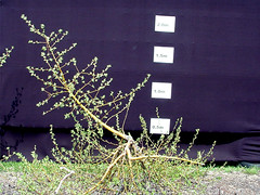 G.30 Tree