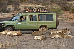 Las Touristas In Tanzania (puliarf) Tags: africa tanzania kenya lions landrover toocloseforcomfort pantheraleo serengetinationalpark vantagetravel