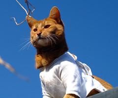 Master of all he surveys (sallycat101) Tags: orange cat ginger chats furry katten kitty gatos somali katter katzen gatti sorrel abysinnian abessinier