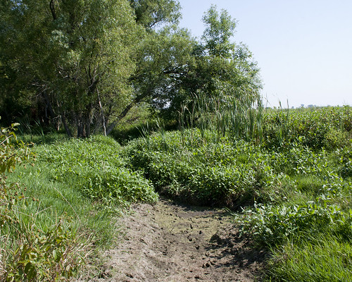 08312011JGW-EmiquonClarkRoad-WetlandPond_MG_1915
