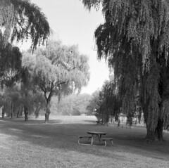 Bench under Willows (^ Missi ^) Tags: morning summer urban blackandwhite bw ontario canada film monochrome mediumformat waterfront kodak hc110 hasselblad lakeshore mississauga urbanlandscape trix400 portcredit kodaktrix400 missi1005