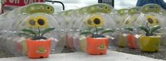 Solar Sunflowers