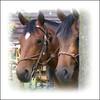 paardenhoofden (annelies_visser) Tags: drenthe paard orvelte paardenhoofd