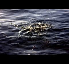 We hit the sunny beaches... (*karla) Tags: light sea summer sun beach canon 50mm drops dof bokeh summertime ripples havefun