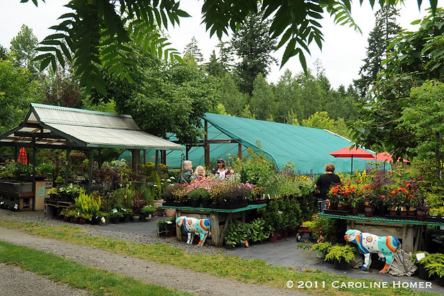 The retail nursery at Dragonfly Farms