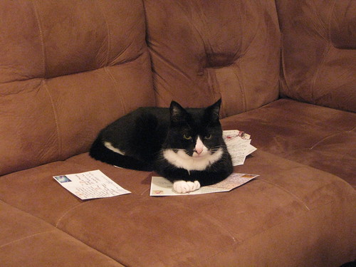 Feline postal brigade: Soda guards my postcards