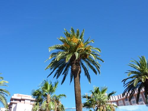 Palmier a Vegas by Julie70