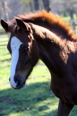 Rivendell Beregond (neulands) Tags: winter horses southafrica cheval babies impressions karin pferde stud rivendell foals fohlen koep