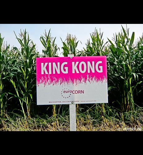 _kingkong