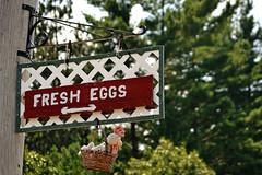 Fresh Eggs! (KAM918) Tags: silly chicken sign stuffed basket humor newhampshire nh fresh eggs pelham fresheggs stuffedchickeninabasket