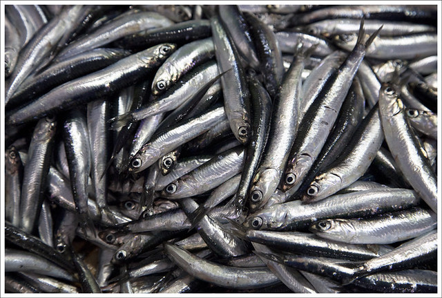 Sardines, Ventimiglia Fish Market