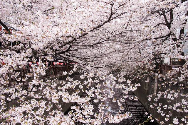 110409_164452_目黒川_桜