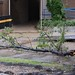 Another, larger branch down near the entrance of the former Zanzibar building