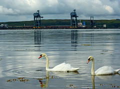 Terminal Swans 1 (g crawford) Tags: sea reflection bird water birds reflections river boats island islands coast scotland clyde boat seaside swan ship ships scottish terminal cranes swans coastal shore ore crawford scots ayrshire fairlie clydeport clydecoast bythesea cumbrae firthofclyde hunterston oreterminal bigcumbrae clydeportauthority ayrshirecoast bulkaustralia