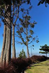 Trees (hidayat59) Tags: travel tree canon indonesia bandung 600d cihideung efs18135is