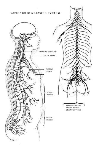 endocrine gland system in psychology