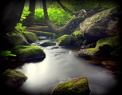 evening at the stream (TroyMasonPhotography) Tags: longexposure love forest washington moss interestingness nikon stream peace northwest hike sensual lakegeorge explore serenity backpack wife d200 mtrainier magical ephemeral photostream dagobah fangorn westsideroad 2011 500px myblurwater