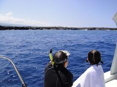 ドルフィンスイムハワイ島