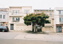 Lone Bronze Loquat (8th Avenue between Kirkham and Lawton) (sf eyes) Tags: foundinsf banal contax167mt gwsf treesontuesday