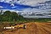 Farmlands ( view of Great Durnford ) (Hawkonefive) Tags: colorphotoaward artistoftheyearlevel3 artistoftheyearlevel4 artistoftheyearlevel5 artistoftheyearlevel7 artistoftheyearlevel6