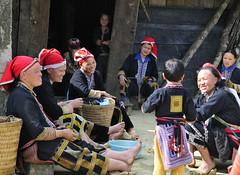 76_LAO38150099 (TC Yuen) Tags: vietnam sapa hmong terracefarming locai