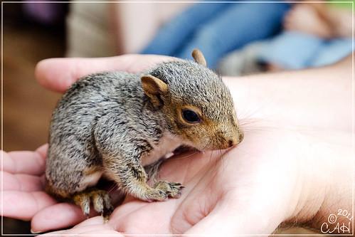 Baby Squirrels 9-3-11 12