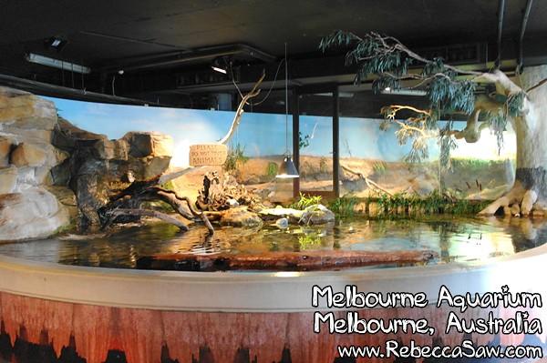 MELBOURNE AQUARIUM-34