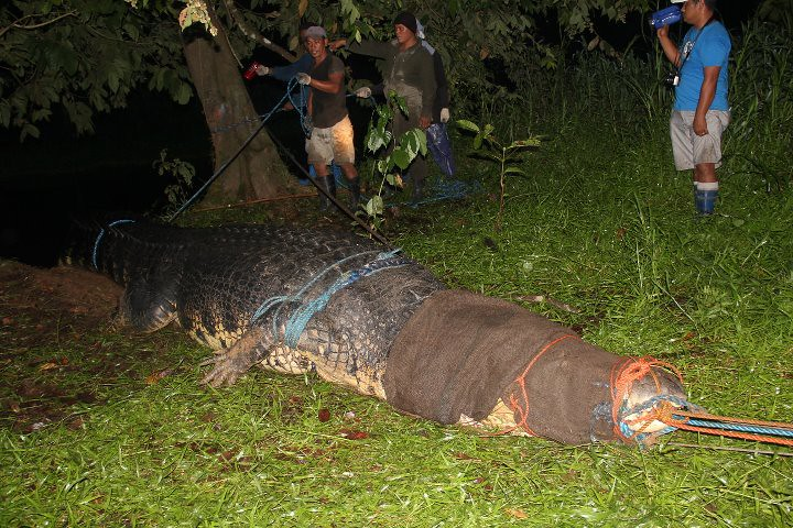 21 foot giant crocodile cuaght in the town of Bunawan, Agusan del Sur