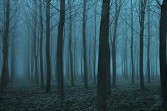 la foresta incantata (mat56.) Tags: trees winter nature misty fog alberi landscapes day natura campagna nebbia inverno paesaggi lombardia cremona pianura padana mat56 roncadello