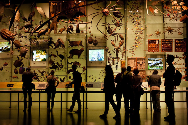 250/365 - Hall of Biodiversity, American Museum of Natural History.