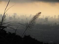 concrete jungle (explore) (DOLCEVITALUX) Tags: mountain tourism rain san cloudy manila shotgun hazy mateo timberland