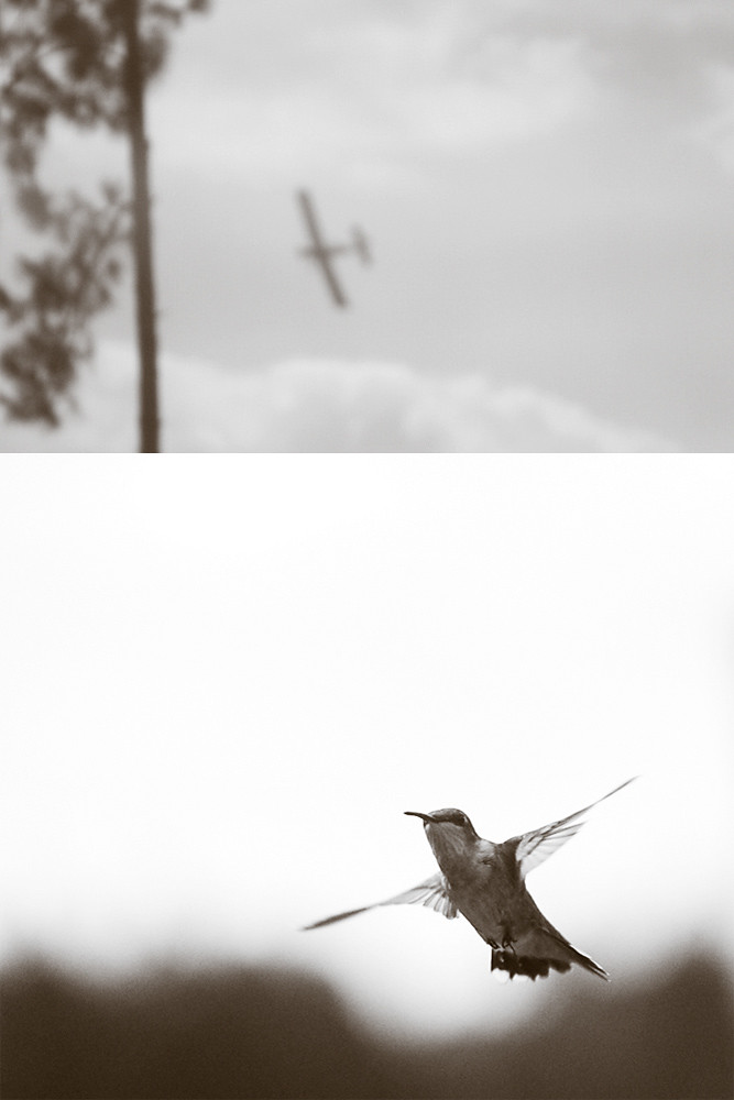 Sepia 8/30:  Flight