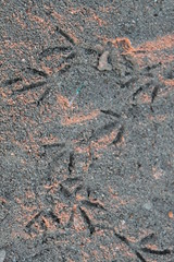 bird tracks (airdrie.m) Tags: beach sunrise indonesia island tropical tropics beachside earlymorninglight giliislands gilisindonesia