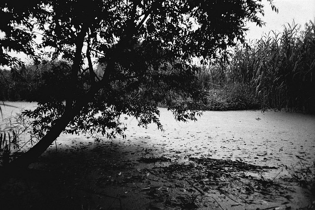 pic of life [Pentax Espio Mini x Fujifilm Neopan 1600]