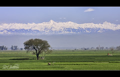 Vista:The Comely (SMBukhari) Tags: pakistan mountains tree nature landscape village fields punjab pir sialkot marala pirpanjal gondal panjal headmarala syedmehdibukhari smbukhari