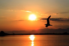 Sunset in vistonis (Simos1968) Tags: lake birds canon nationalgeographic 500d xanthi portolagos vistonida simos1968 simossimos