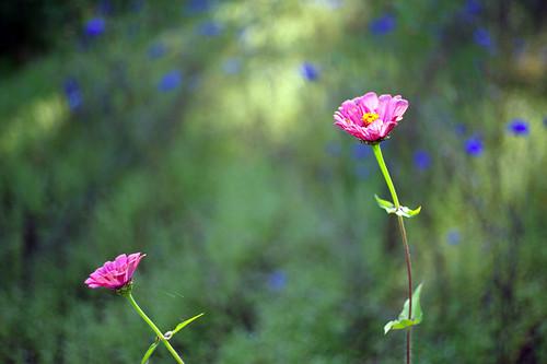 Sommergarten by Fotosilber