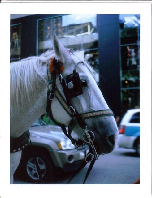 Faith the carriage horse