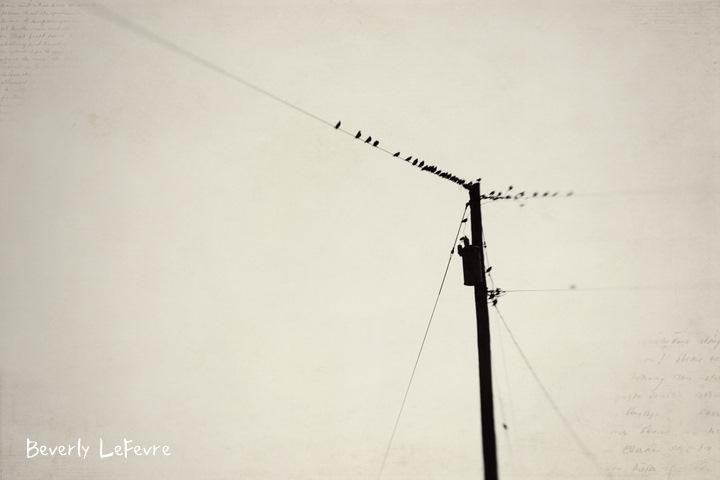 birds on the line