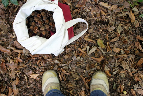 collecting beechnuts.