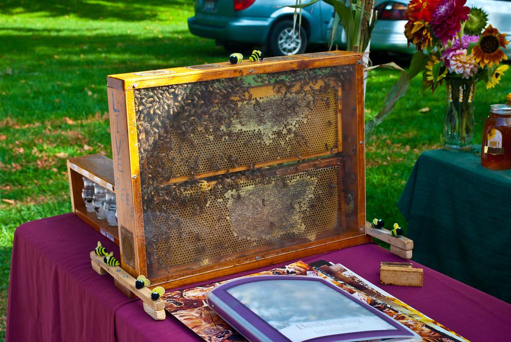 365-99 Beehive