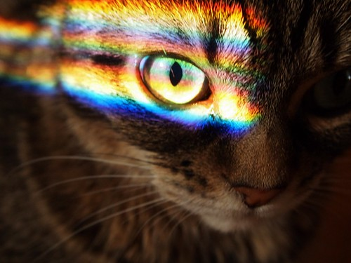 rainbow in her eye