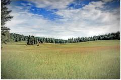 reflective meadow (Father Tony) Tags: summer clouds southdakota blackhills landscape photo seasons meadow adobephotoshopelements canonefs1755mmf28isusm canoneos50d exposurefusion adobephotoshopelements7 alienskinexposure3 alienskinbokeh2 pathwaysaspiritualsanctuary