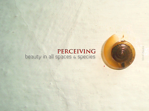 Perceiving beauty
