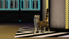 screen-sims-3-pets-pitomci_53_20110816_1085594054
